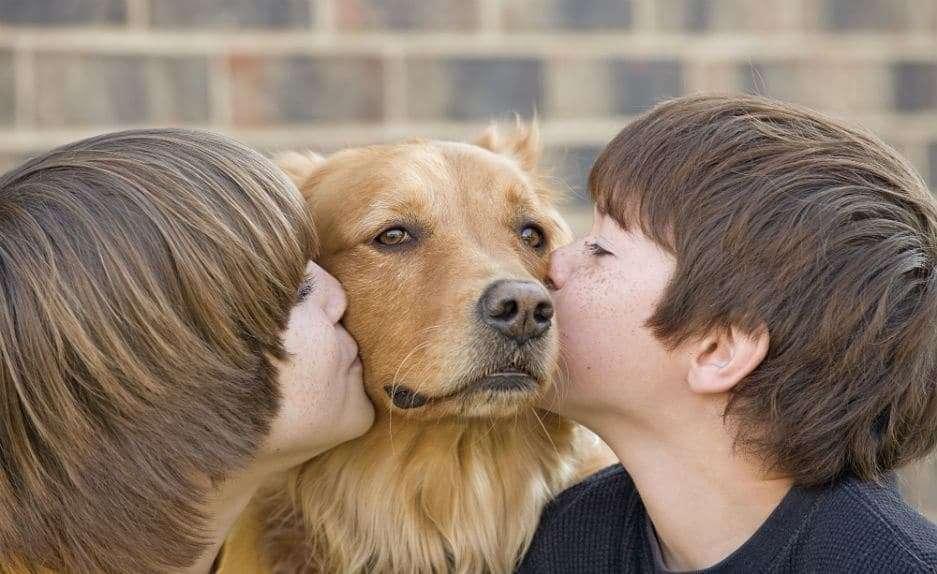 raza de perro adecuada