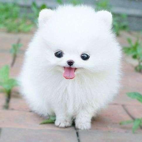 Fotos de perros bonitos