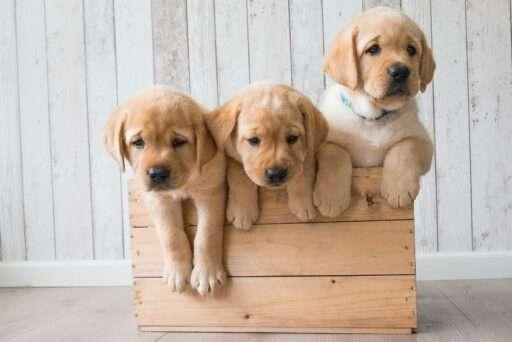 Perros Bonitos